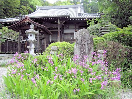 子嶋寺に開花する花