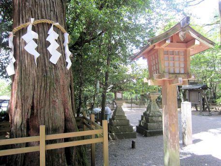 石上神宮の神杉