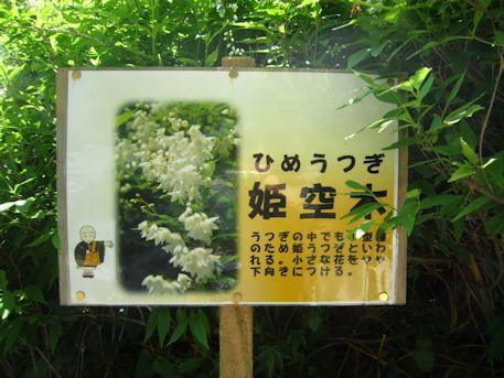 長谷寺の姫空木