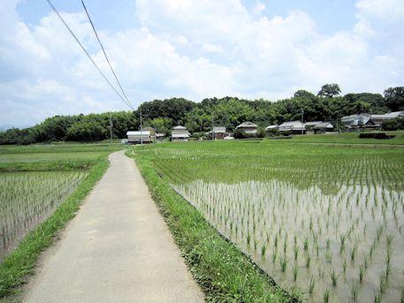 香久山へ続く畦道
