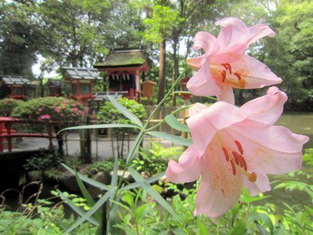 市杵島姫神社とささゆり