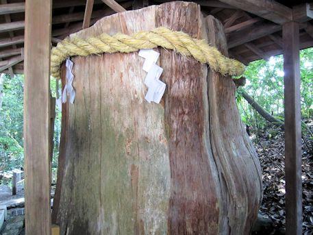 大神神社の志るしの杉