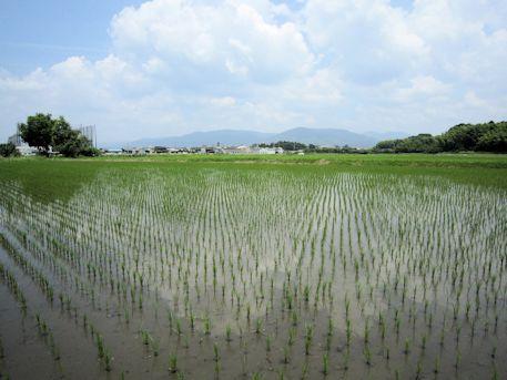 三輪山と田圃