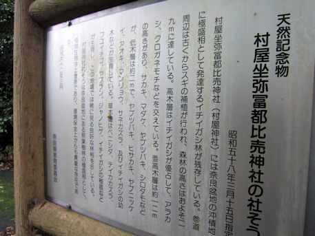 村屋神社の社叢