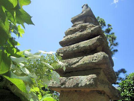 久米寺紫陽花と七重石塔