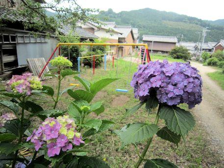 紫陽花とブランコ