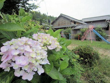 十二柱神社の紫陽花