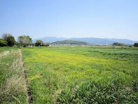 藤原宮跡と香久山