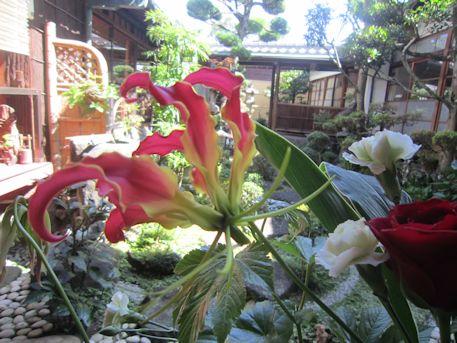 グロリオサと中庭
