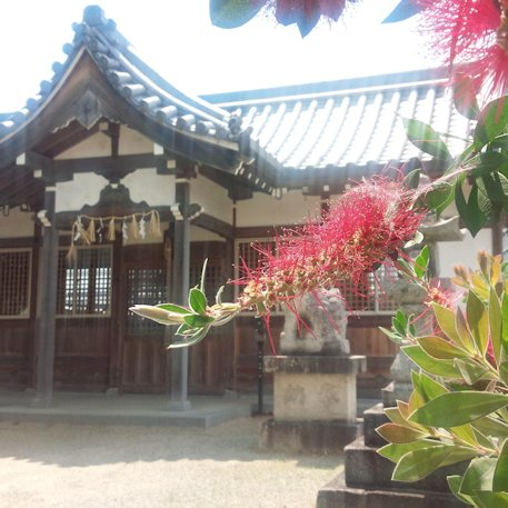 姫皇子命神社とブラシの木