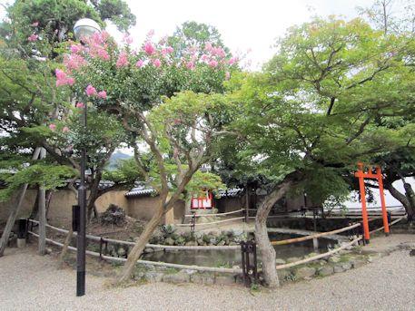 新薬師寺のサルスベリ