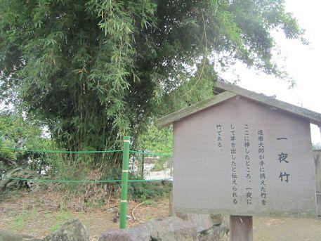 達磨寺の一夜竹