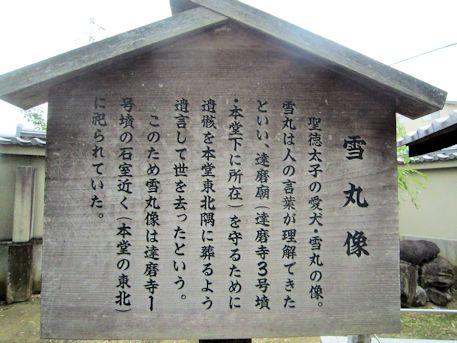 達磨寺の雪丸像