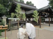 恵比須神社の茅の輪神事