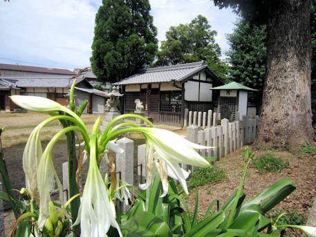 ハマユウと山之坊山口神社