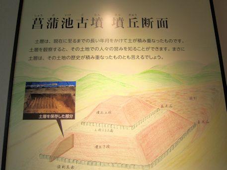 菖蒲池古墳墳丘断面図