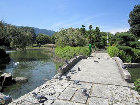 屋敷山公園のハト
