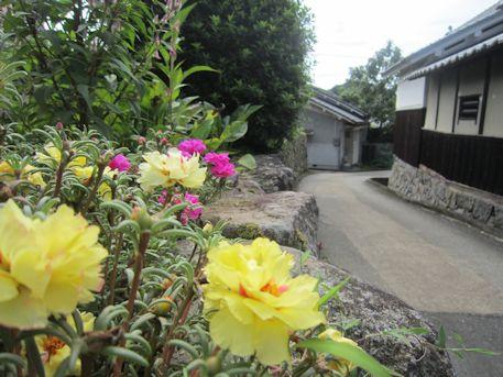 忍坂街道の花