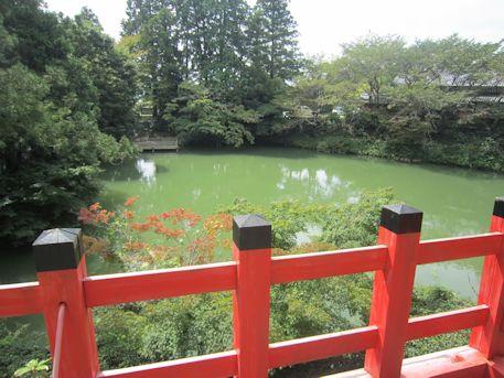 高鴨神社の放生池