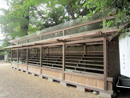 高鴨神社の日本さくら草