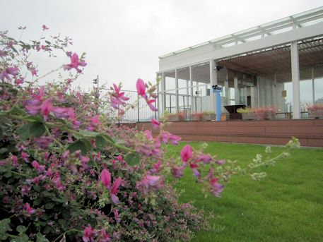 橿原総合庁舎屋上庭園の萩