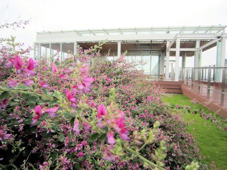 橿原総合庁舎屋上の萩