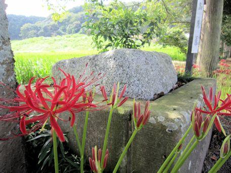 蜘蛛塚と彼岸花
