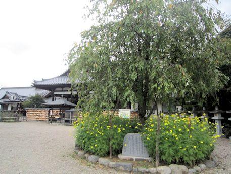 仲麻呂望郷しだれ桜とコスモス