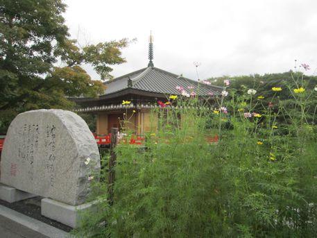 阿倍仲麻呂歌碑とコスモス