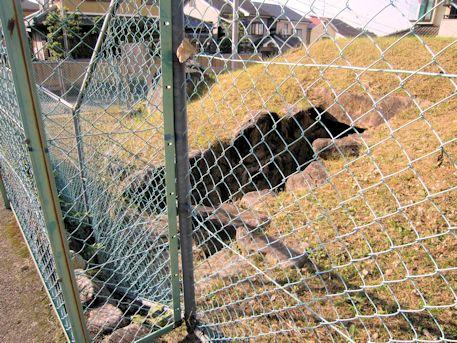 コロコロ山古墳のフェンス
