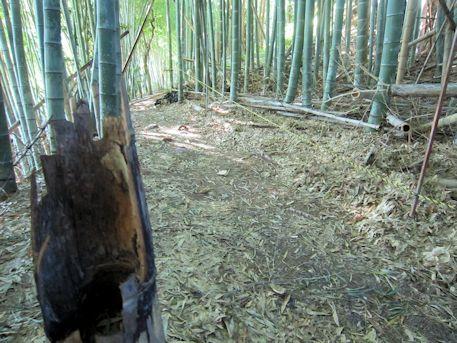 東乗鞍古墳の竹林