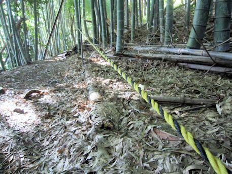 東乗鞍古墳の竹藪