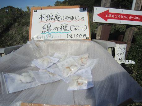 綿の種販売