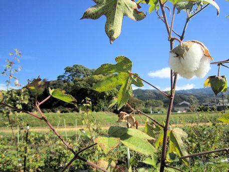 綿の実と夜都伎神社社叢