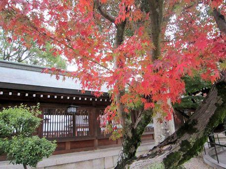 廻廊と紅葉