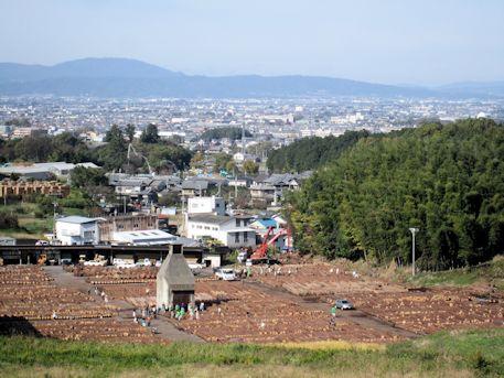 木材振興特別市
