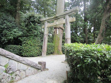 高鴨神社の御神木