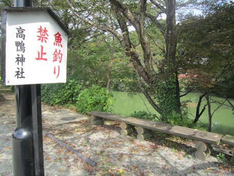 高鴨神社の池