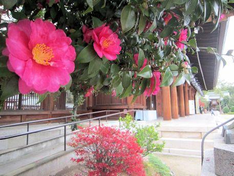 椿と外拝殿