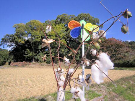夜都伎神社と木綿