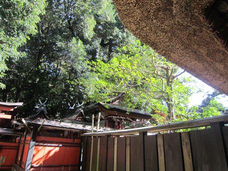 夜都伎神社の藁葺屋根