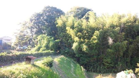 石寸山口神社の杜