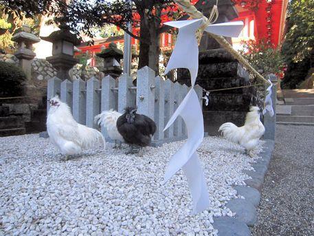 修祓所の鶏