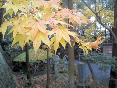紅葉と衣掛杉