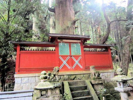 天一神社の御神木