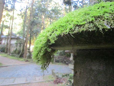 石灯籠の苔