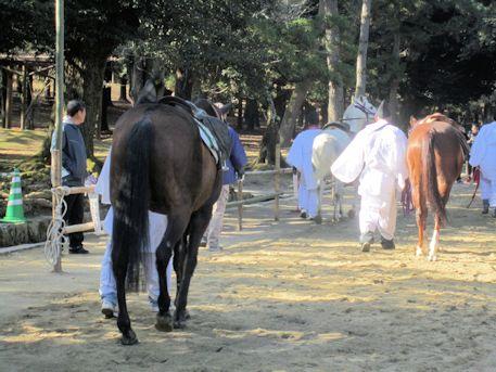 春日若宮おん祭の馬