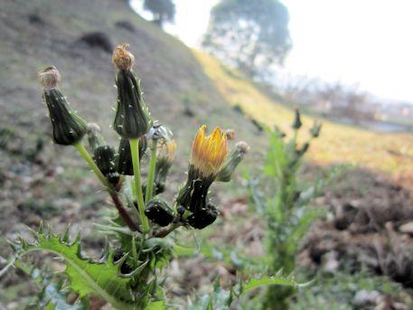珠城山3号墳と花