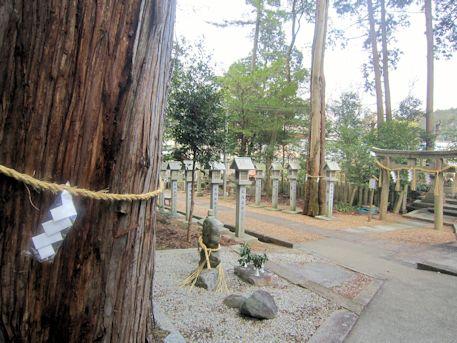 宗像神社の御神木