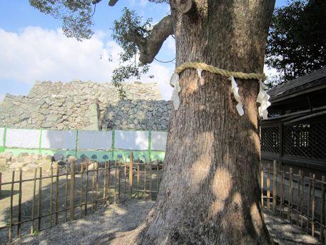 柳沢神社御神木と石垣
